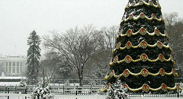 the history of the national christmas tree in washington dc the lise howe group - Washington Dc Christmas Tree